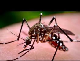 mosquito_foto.jpg