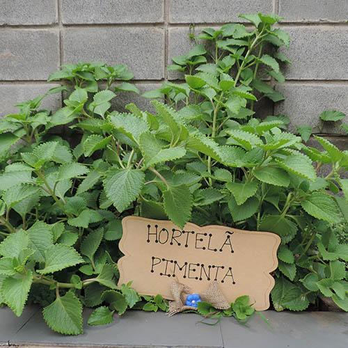 hortela-pimenta